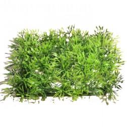 Plantes pour décor jungle